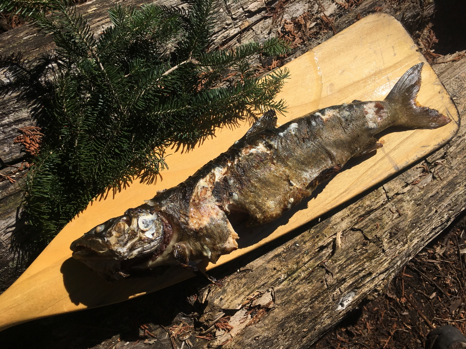 Fire-Roasted Lake Trout