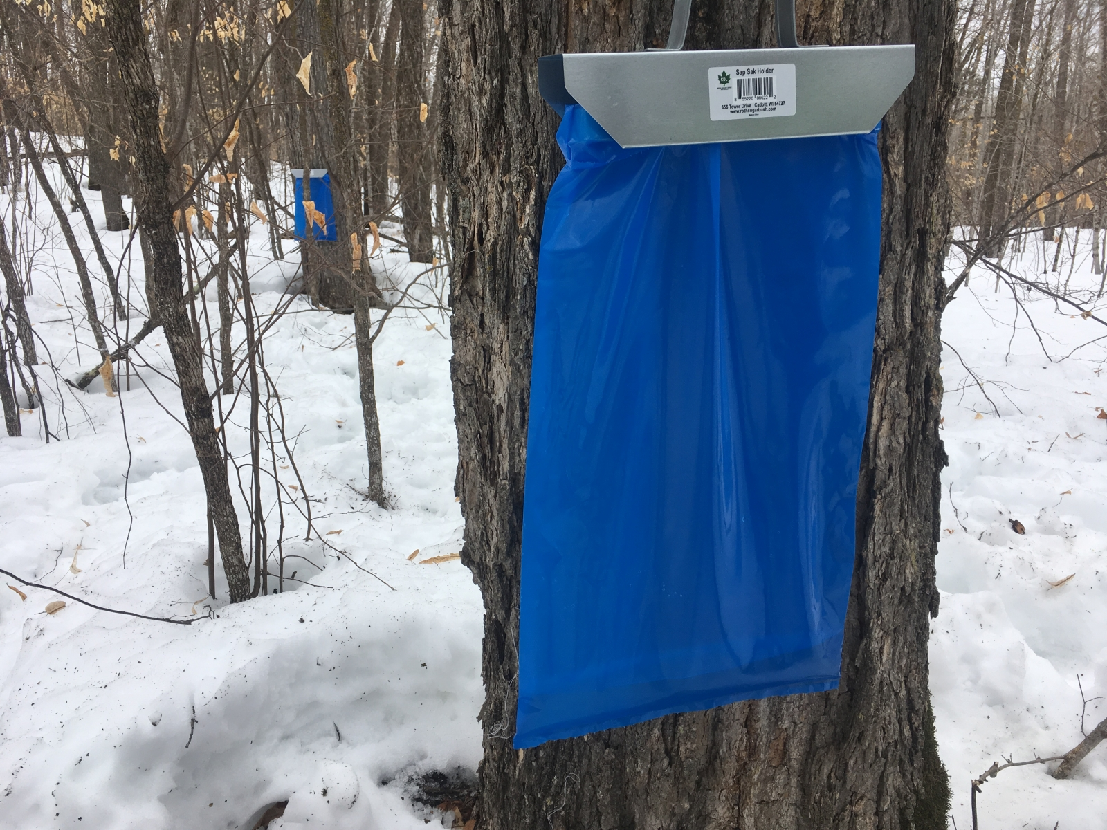 Maple sap bags