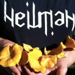 Foraging in Minnesota: Focus on Chanterelles