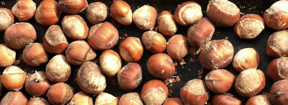 wild hazelnuts