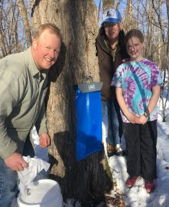 Minnesota maple syruping