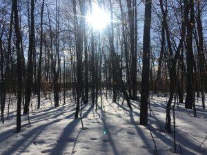 Minnesota maple basswood forest