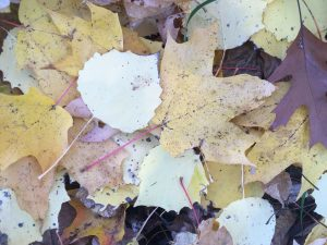 Mixed fall leaves