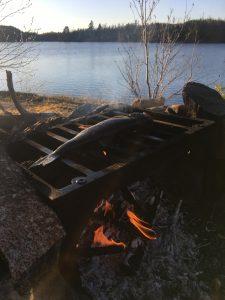 BWCA lake trout