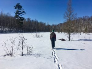 Winter Hike Over the Cranberry Bog